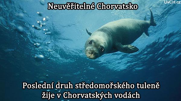 Poslední druh středomořských tuleňů žije v chorvatských vodách