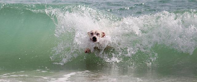 pláž pro psy v Chorvatsku