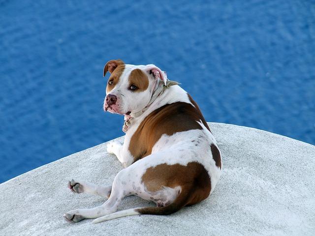 pes v chorvatsku