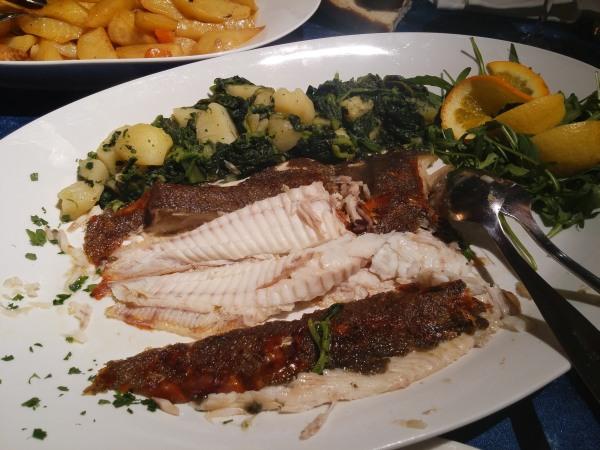 ryby chorvatsko