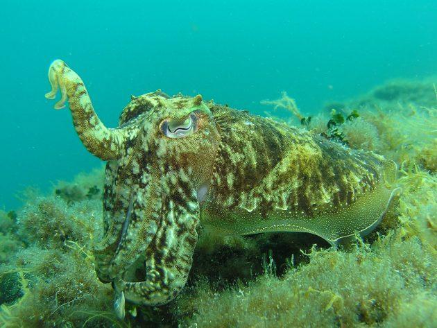 potápěčské kurzy Chorvatsko