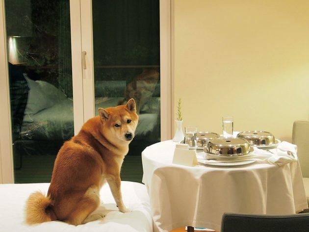 ubytování v Chorvatsku se psem