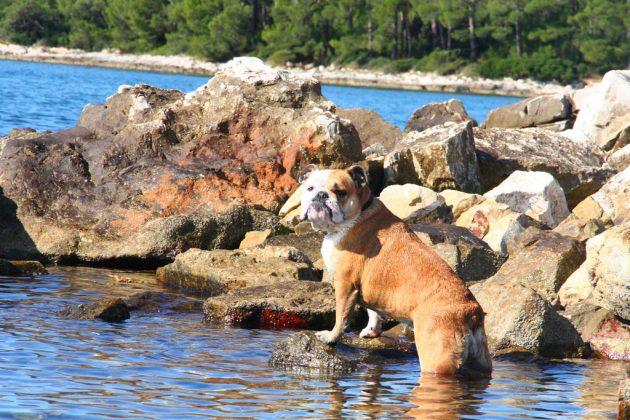 se psem v Chorvatsku