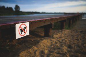 pes a pláž