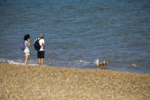 pes na pláži