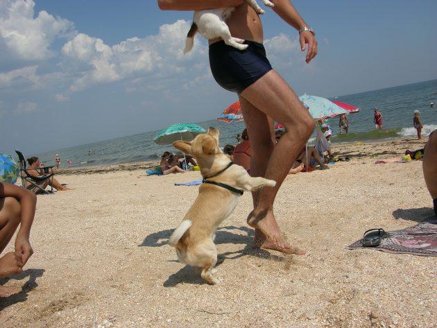Kde najdete v Chorvatsku pláže pro psy