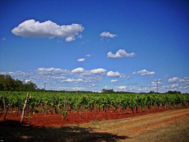 Cesta po chorvatských vinicích