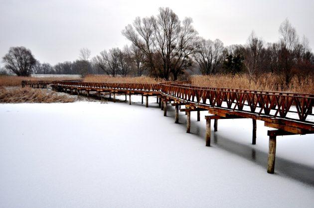 kopacki-rit_Chorvatsko v zimě