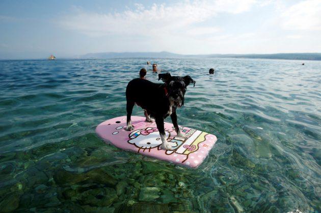 Dog friendly: Crikvenica vítá psy i jejich páníčky!