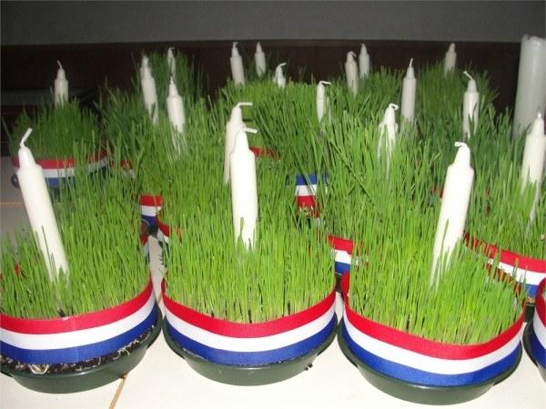 vánoční pšenice
