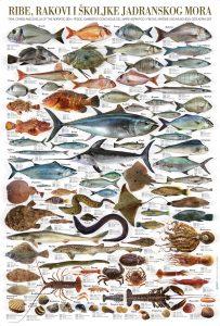 ryby v Chorvatsku