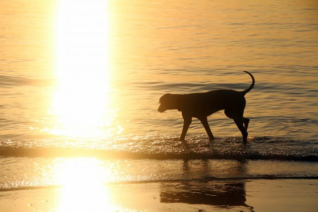 dovolená se psem v Chorvatsku
